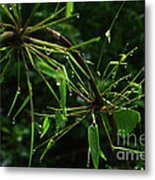 Morning Dews Metal Print