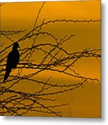 Morning Dove Metal Print