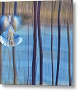 Morning Dove Metal Print by Theresa Tahara