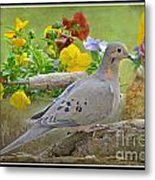 Morning Dove With Pansies Metal Print