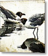 Morning Gulls - Seagull Art By Sharon Cummings Metal Print by Sharon Cummings