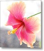 Morning Hibiscus In Gentle Light - Square Macro Metal Print