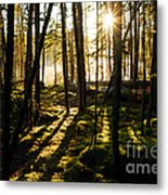 Morning In Canoe Country Metal Print