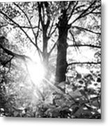 Morning In The Forest Metal Print