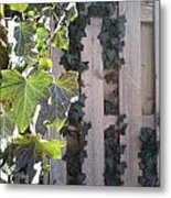 Morning Ivy Metal Print by Jaime Neo