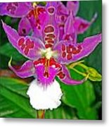 Morning Joy Orchid Metal Print