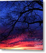 Morning Light Oak Tree Metal Print
