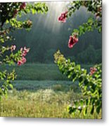 Morning Marsh Metal Print