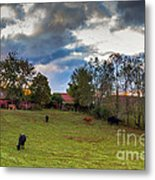 Morning On The Farm Four Metal Print