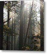 Morning Pines Metal Print