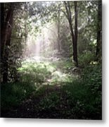 Morning Rays Metal Print by Melissa Krauss