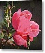 Morning Rose Metal Print