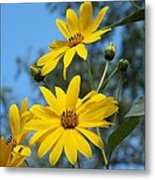 Morning Sunflowers Metal Print