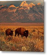Morning Travels In Grand Teton Metal Print by Sandra Bronstein