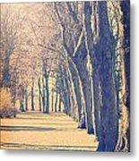 Morning Trees Metal Print