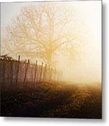 Morning Vineyard Metal Print by Shannon Beck-Coatney