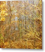 Landscape - Morning Walk In The Woods - 2 Metal Print