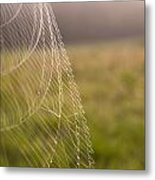 Morning Web Metal Print