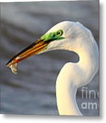 Morning's Catch Metal Print