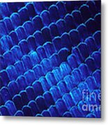 Morpho Butterfly Scales Metal Print