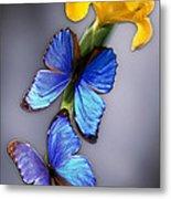 Morpho On Yellow Iris Metal Print
