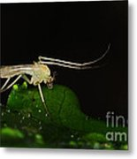Mosquito Metal Print by Paul Ward