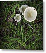 Moss And Fungi Metal Print