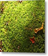 Moss And Leaves Metal Print
