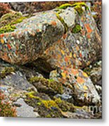 Moss And Lichens In The Scottish Highlands Metal Print