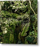 Moss And Stones By The Turquoise Forest Pond On A Summer Day No4 Metal Print