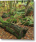 Moss Covered Logs On The Forest Floor Metal Print