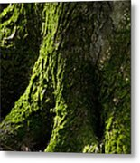 Moss Covered Tree Trunk Metal Print by Christina Rollo