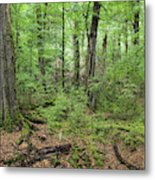 Moss Covered Trees In Forest, Lord Metal Print