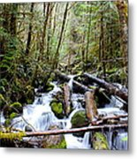 Moss Creek Metal Print