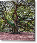 Moss Draped Limbs Metal Print