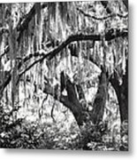 Moss In A Magical Land Metal Print