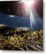 Moss In The Sunlight Metal Print by Steven Valkenberg