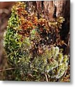 Moss On A Tree Metal Print