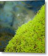 Moss On River Metal Print