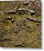 Moss On Rock Metal Print
