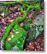 Moss Roots Rock And Fallen Leaves Metal Print