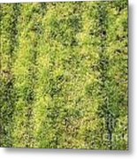 Mossy Grass Metal Print