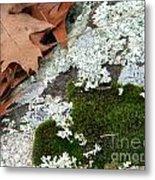 Mossy Leaves Metal Print