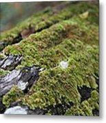 Mossy Log Metal Print