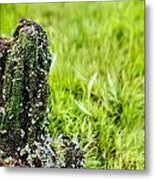Mossy Outcrop Metal Print