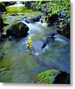 Mossy Rocks And Moving Water  Metal Print