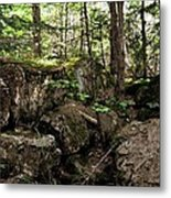 Mossy Rocks In The Forest Metal Print