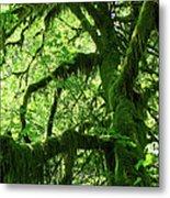 Mossy Tree Metal Print by Athena Mckinzie