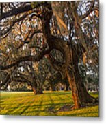 Mossy Trees At Sunset Metal Print