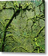 Mossy Trees Leafless In The Winter Metal Print